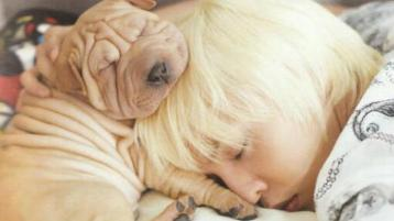 g-dragon-puppy-2